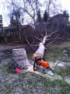 Tree Removal Calgary