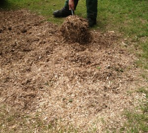 tree-stump-removal-public-gardens-after